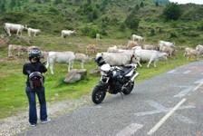 En moto près des troupeaux