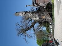 le chêne  d' Allouville
