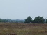 Un autre paysage....