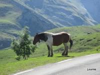 les chevaux aussi, sont libres