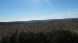 vue vers les vignes