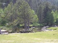 La rivière La Têt au bord de la D60
