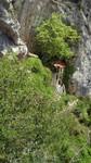 Descente vers l'ermitage de St-Antoine-de-Galamus.