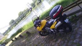 A l'ombre, au bord de la Loire, à Chalonnes