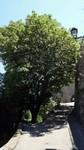 Rue de l'église d'Evenos
