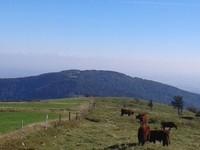 vue sur les Alpes depuis le Markstein