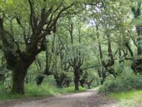 Forêt de chêne-liège