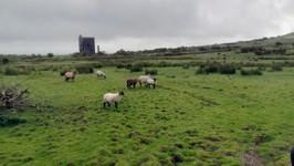 quelques vestiges de systèmes d'aération des mines d'étain sur le mont Caradon Hill (371 M.)