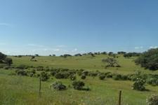 Un champ typique dans la région de Beja