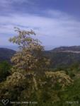 Parc du Nebrodi